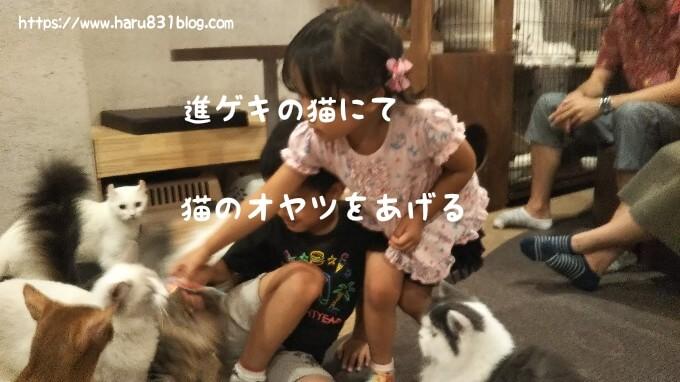 子どもが猫カフェで猫におやつをあげている写真